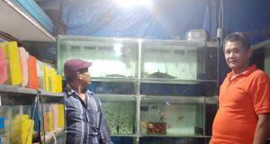 Penjual Ikan Hias Araipama